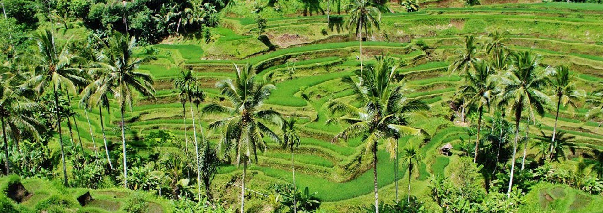 Bali Griyasari Tours Travel
